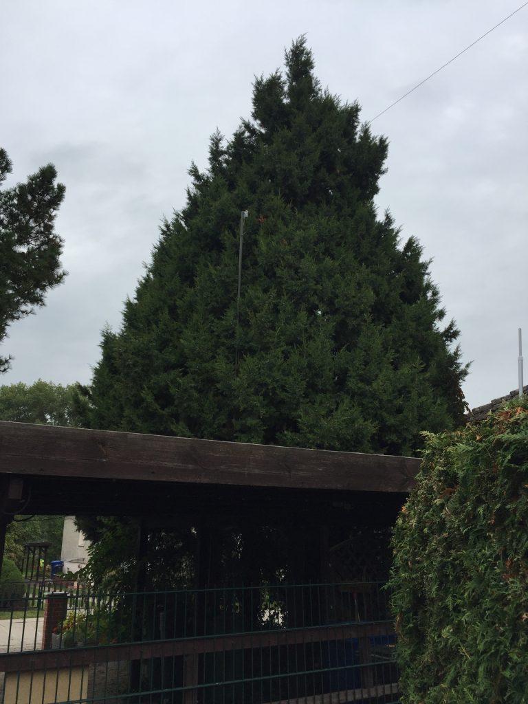 Antenne im Baum